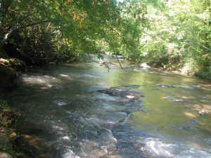 creek with trees